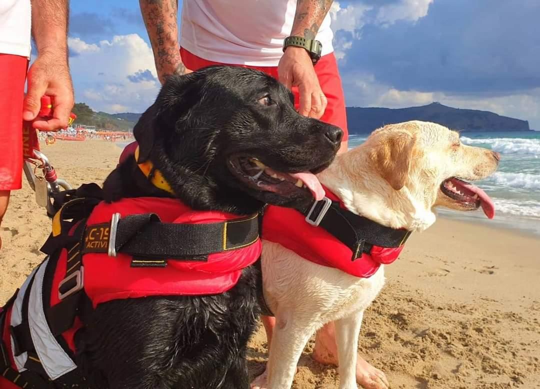 15enne rischia di annegare in mare a Palinuro: salvata da due cani bagnino