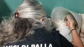 Morto Angelo, il cane diventato simbolo degli incendi in Sardegna