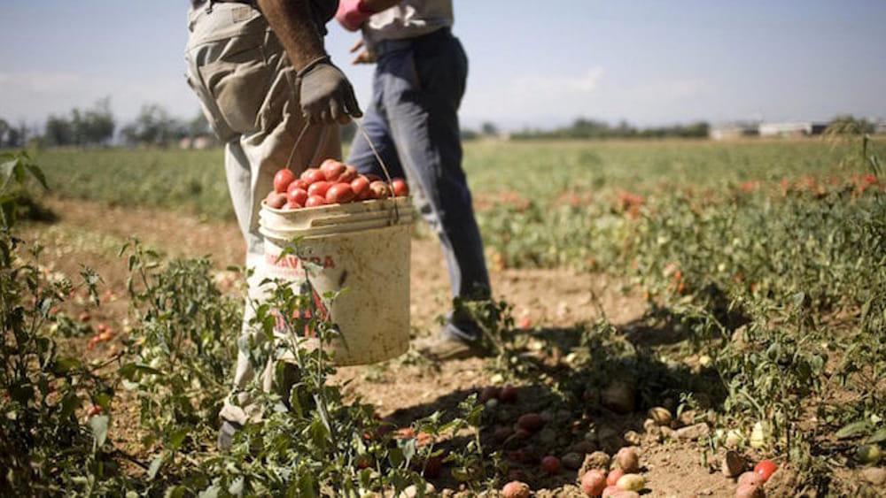Il Comune di Afragola ha vietato il lavoro nei campi nelle ore più calde