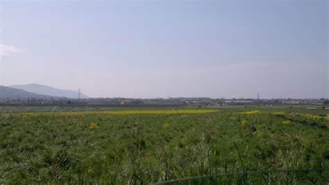 """L'allarme: """"In 2 anni persi in Campania ha perso 210 ettari di superficie naturale"""""""